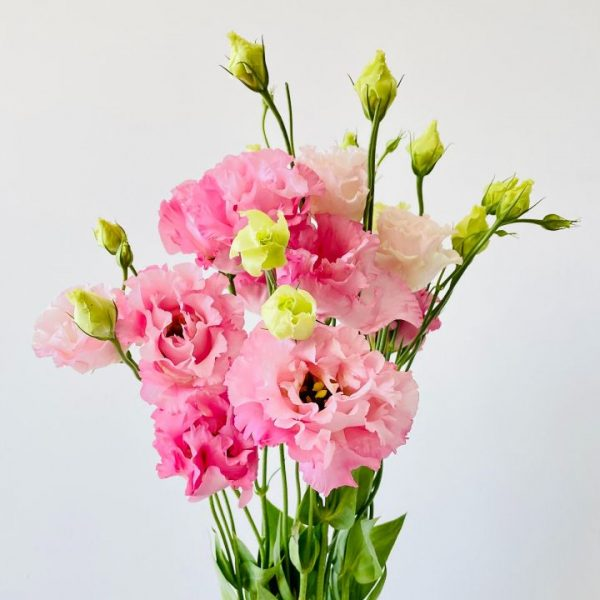 Cut Flowers – By Bunch